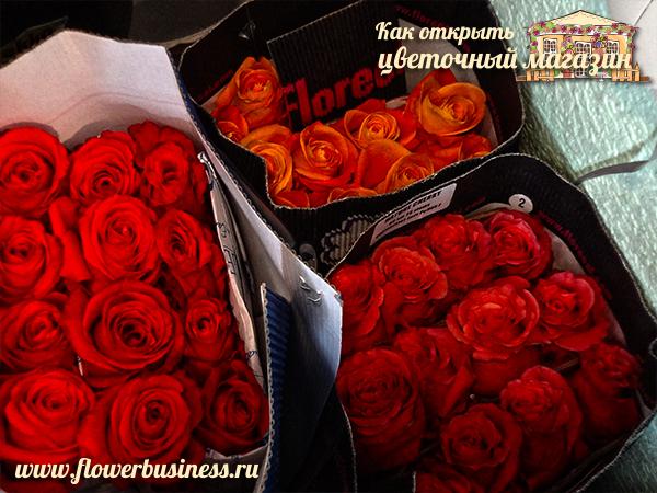 Розы, красивые розы